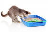 Uncleanliness in cats